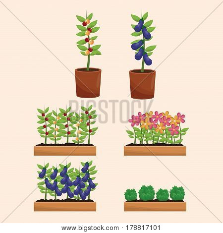 pot plants orchard garden vector illustration eps 10
