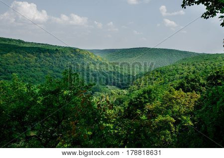 Mountain Landscape, Wonderful Forest On Mount Germinating