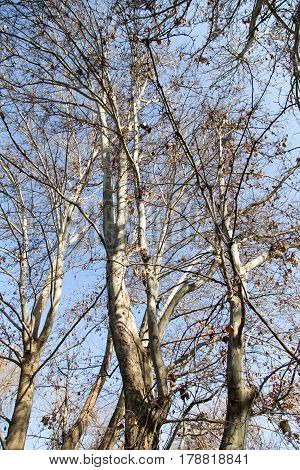 leafless tree branches against the blue sky .
