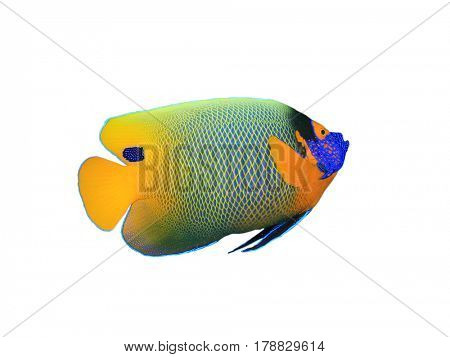 Blue-face Angelfish isolated on white background. Tropical fish
