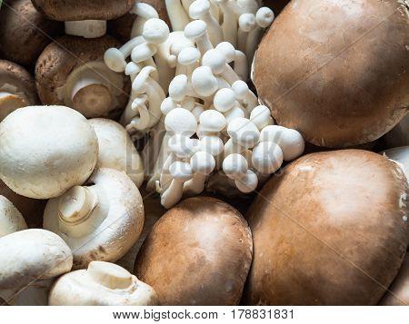 Various raw mushroom types  - Portobello mushrooms, eringi, champignons,  Shimeji mushrooms. Mushrooms background