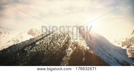 Scenic view of snow covered mountains in forest