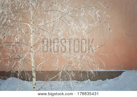 Beautiful view of tree in hoarfrost