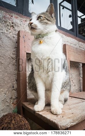 Cat Sitting Leisure On Wooden Chair stock photo