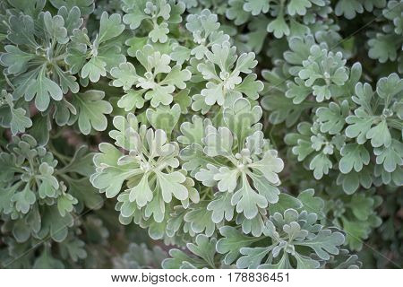 Green Leaves Plant Nature Background stock photo