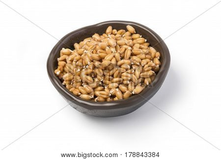 raw sprouted wheat germ for healthy food in a brown ceramic bowl isolated on white background with clipping path