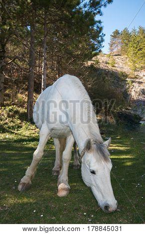 White horse grazing in nature, Park of Monti Simbruini in Lazio