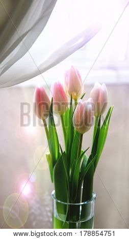 Pink tulips on the background of a window in a glass vase.