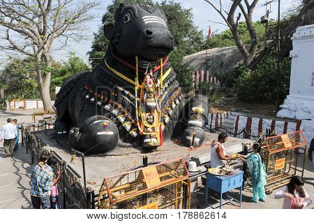 Mysore india - 23 January 2015: The Nandi bull on Chamundi Hill is a particularly notable statue that dates from 1659 and pilgrims from all over India climb over 1000 steps to pay their respects