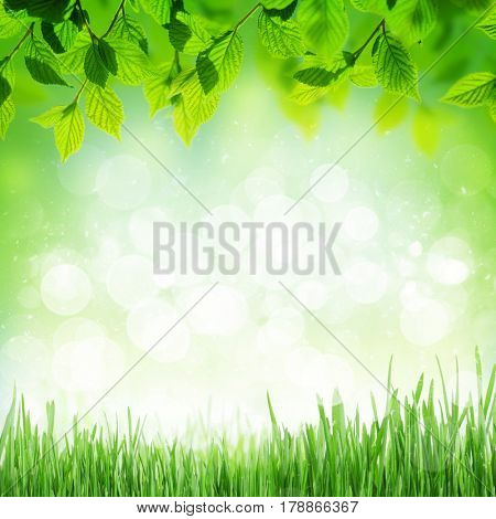 Abstract sunny spring background with grass and chamomile flowers
