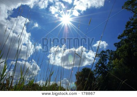 Cattails, Sun, And Clouds