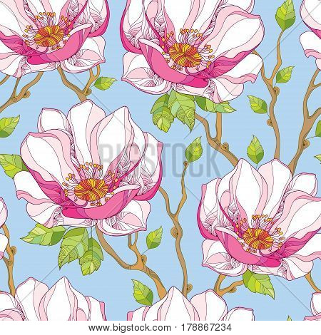 Vector seamless pattern with ornate magnolia flower in pink and green leaves on the blue background. Floral background in contour style for summer design.