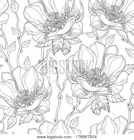 Vector seamless pattern with contour magnolia flower and ornate leaves on the white background. Elegance floral background in outline style for summer design and coloring book.