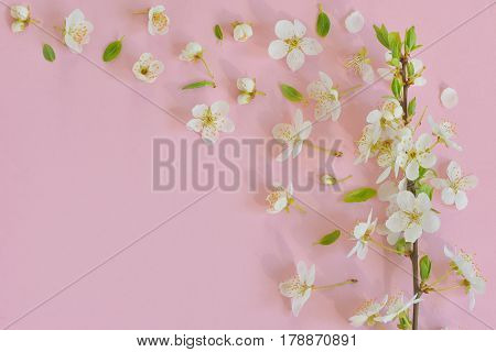 Cherry blossom on pink paper background, clsose up