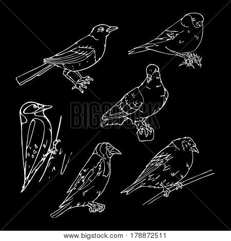 Birds engraved style. Set emblem. Bird, oriole, chickadee, sparrow, blackbird, nightingale, finch, bunting, hangbird, goldfinch, canary, bullfinch, siskin. Engraving, stencil style. Logo, sign,  symbol. Stamp, seal. Simple sketch.