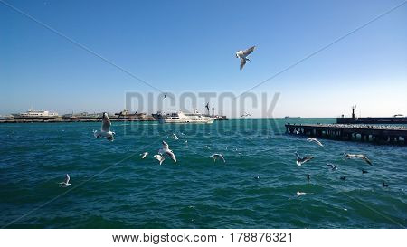 The view of the fleeing ship in the sea and a large number of seagulls flying in the foreground in a Sunny beautiful day