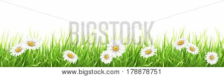 Grass and chamomile. High detailed vector illustration. Element for the design foreground card about nature.