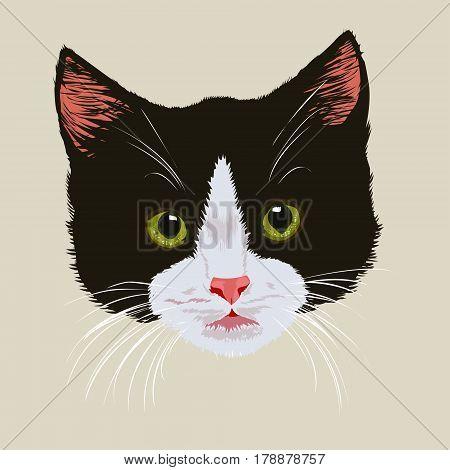 Cute black kitten .Portrait of black cute tabby kitten on light background.