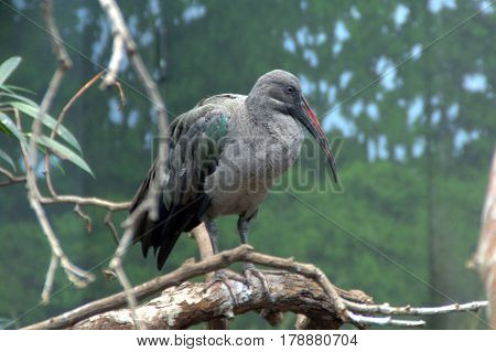 long beaked grey bird perched on a tree branch