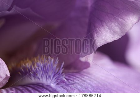 Iris flower fragment macro shot local focus