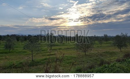 Panorama view of a field in tuscany