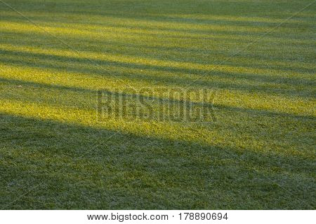 The artificial turf green grass on the football field with the rays of the sun