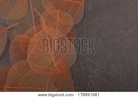 Dried transparent leaves on stone background. Beautiful nature pattern with empty place . Dried leaves texture. Dried florist supplies.