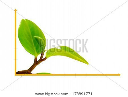 Isolated on white background Green sprout on straight coordinate - diagram