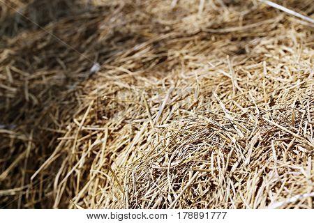 Rice straw closeup. Brown straw soft focus background