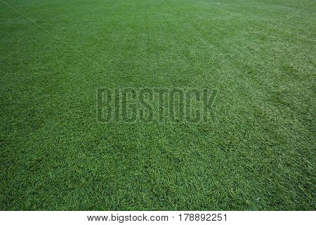 The artificial turf green grass on the football field