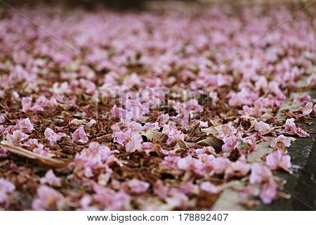 Perspective look of landscape beautiful flowers falling on street soft focus