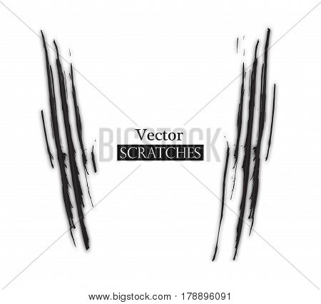 Claw scratch on white background. Vector illustration.