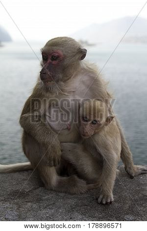 monkey and baby monkey sitting primate  wildlife