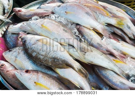 Fresh Raw Seafood At Local Market