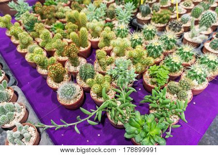 Group of cactus green plant nature garden