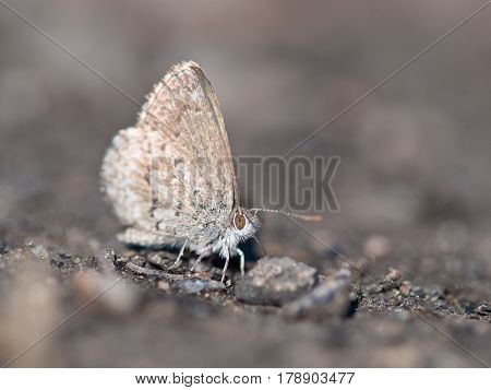 Grey Butterfly On Grey Background