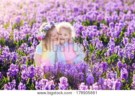 Kids gardening. Children play outdoors in hyacinths meadow. Little girl and boy brother and sister work in the garden planting hyacinth flowers watering hyacinth flower bed. Family fun in summer.