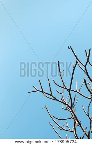 bare tree branches with bright clear blue sky background. beautiful natural withered leafless twig woody plant shape.