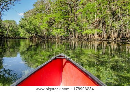 Red Canoe bow on Manatee Spring River