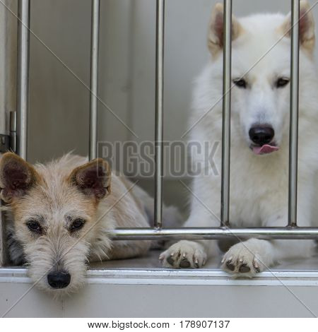 Two friend animal, dogs in home cage