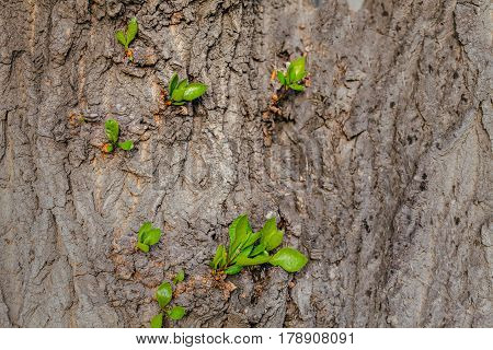 Horizontal close-up shot of the fresh green leaves growing on the trunk.