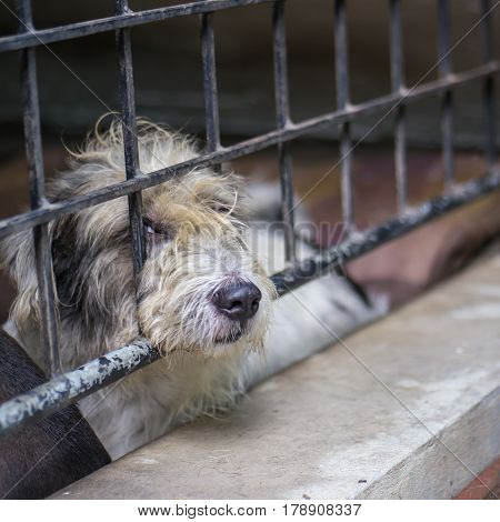 Lonely street dog, animal in home cage