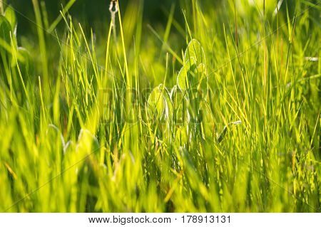 Beautiful April Grass And Leaves Against The Sunlight In The Evening