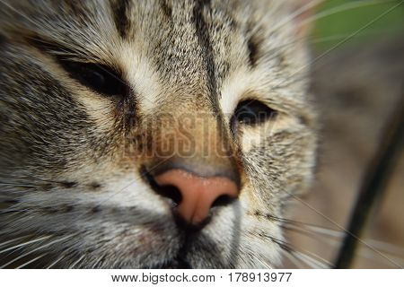 Close-up shoot of the thoughtful cat's muzzle