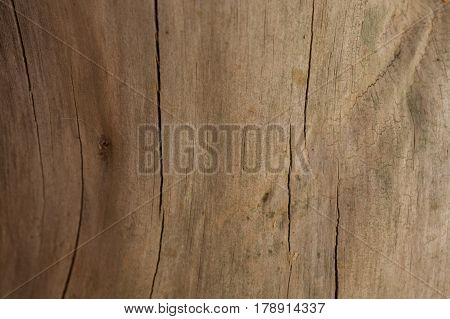 Tree bark background and texture. Wood texture of cut tree trunk. Texture old wood background. Brown wood background. Abstract texture and background for designers.