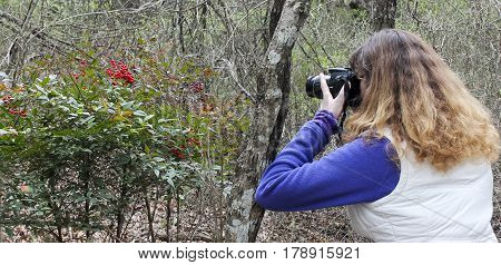 A Woman Photographs Red Berries Cedar Ridge Preserve managed by Audubon in Dallas Texas.