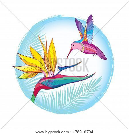 Vector drawing with flying Hummingbird or Colibri with Strelitzia reginae in contour style isolated on white background. Outline tropical bird with exotic flower and palm leaves for summer design.