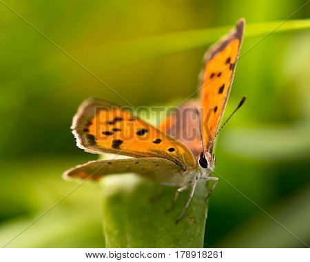 Butterfly Warming Its Wings In The Sun