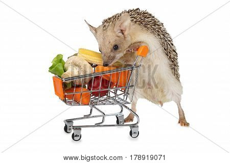 Little African hedgehog carries a cart full of products isolated on a white background