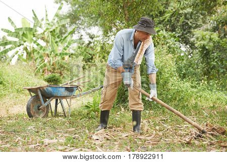Gadener raking leaves to clean ground for planting